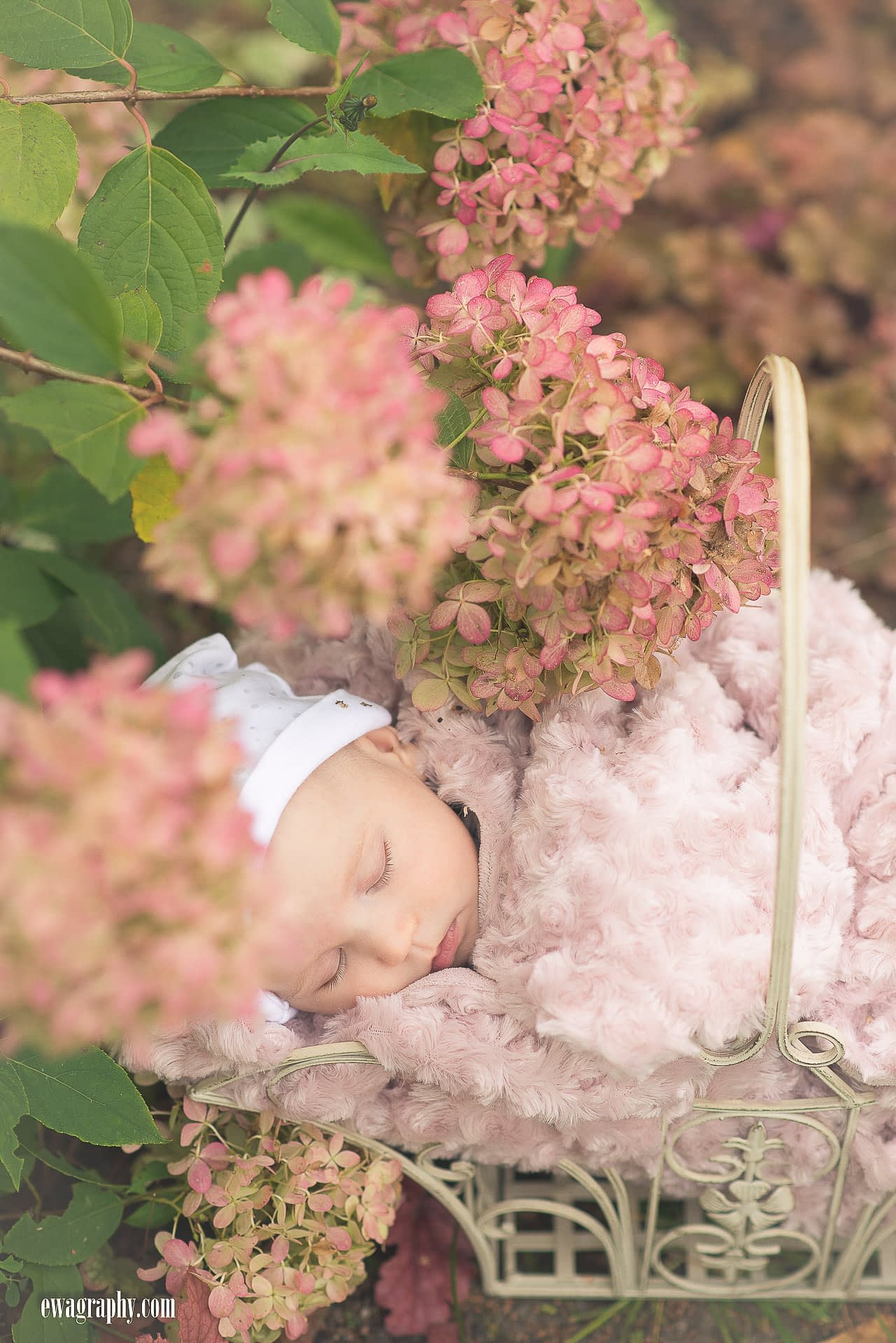 sesja-niemowleca-w-hortensjach-1-of-1